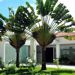 A fachada da banca de Brasília/DF se destaca pelo exuberante projeto de paisagismo.